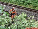Træ væltet ned over sporet. Ved Bredballe. 14/06-2018. KL. 17:00.