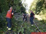 Togtrafikken stoppet af et væltet træ. Mellem Vejle og Børkop. 11/08-2018. KL. 18:18.