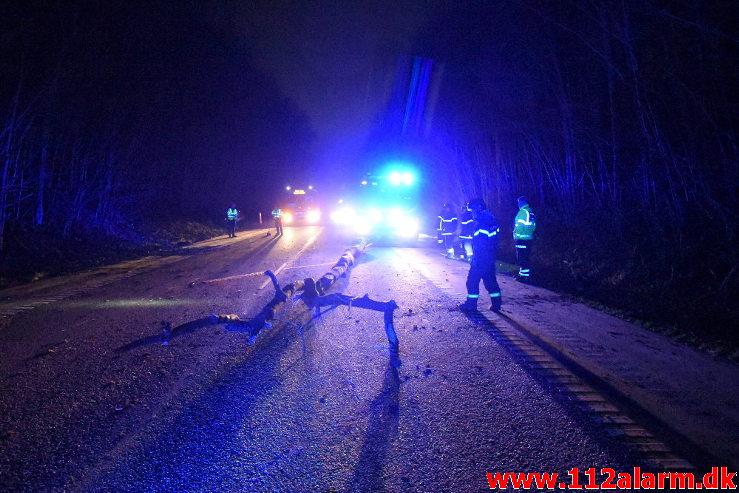 Pludselig lå der et træ tværs over vejen. Koldingvej ved Vejle. 11/01-2020. Kl. 17:54.